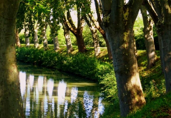Canal des Mélodies, Chansons pour planter des arbres